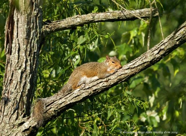 _RK_2645 squirrel lizard 2014_1
