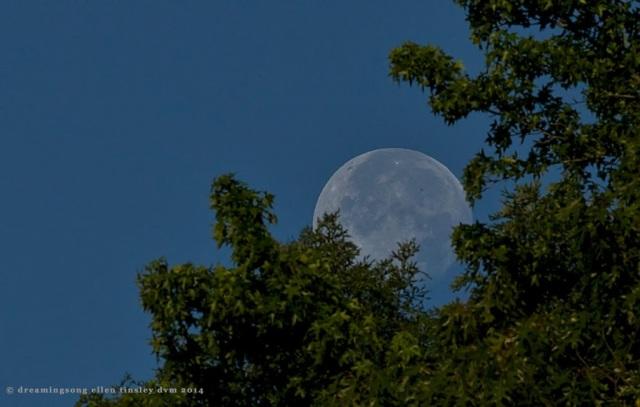 _RK_9664 moon 0649 June 15 2014