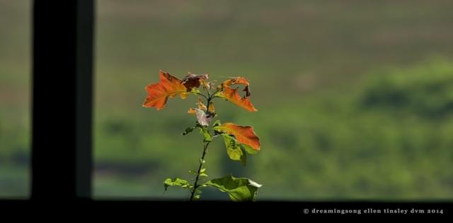 _RK_9991 spring blaze 2014