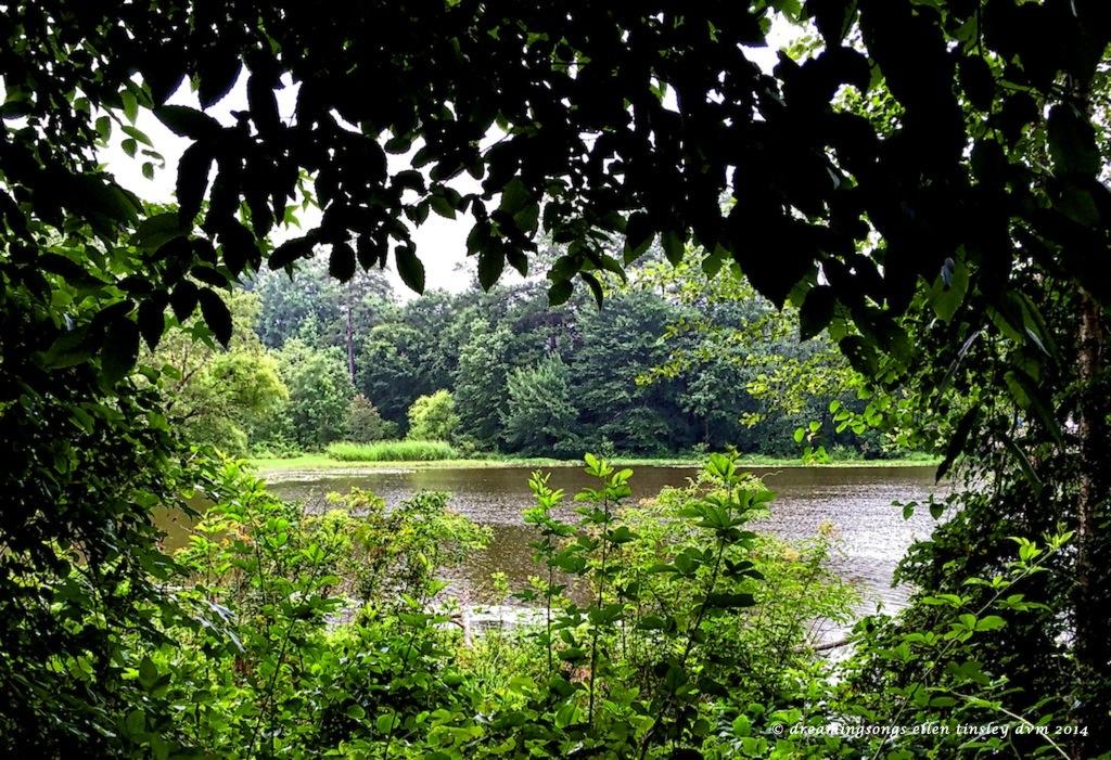 IMG_6629 Yates Mill pond2014 (2)