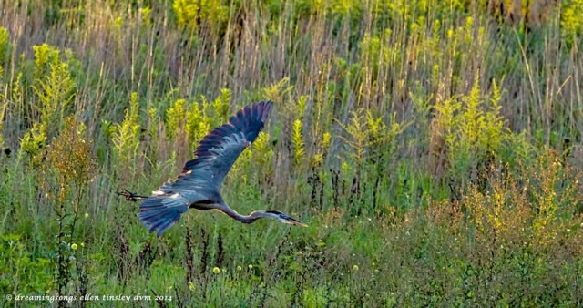 _RK_1197 GBH summer meadow2014