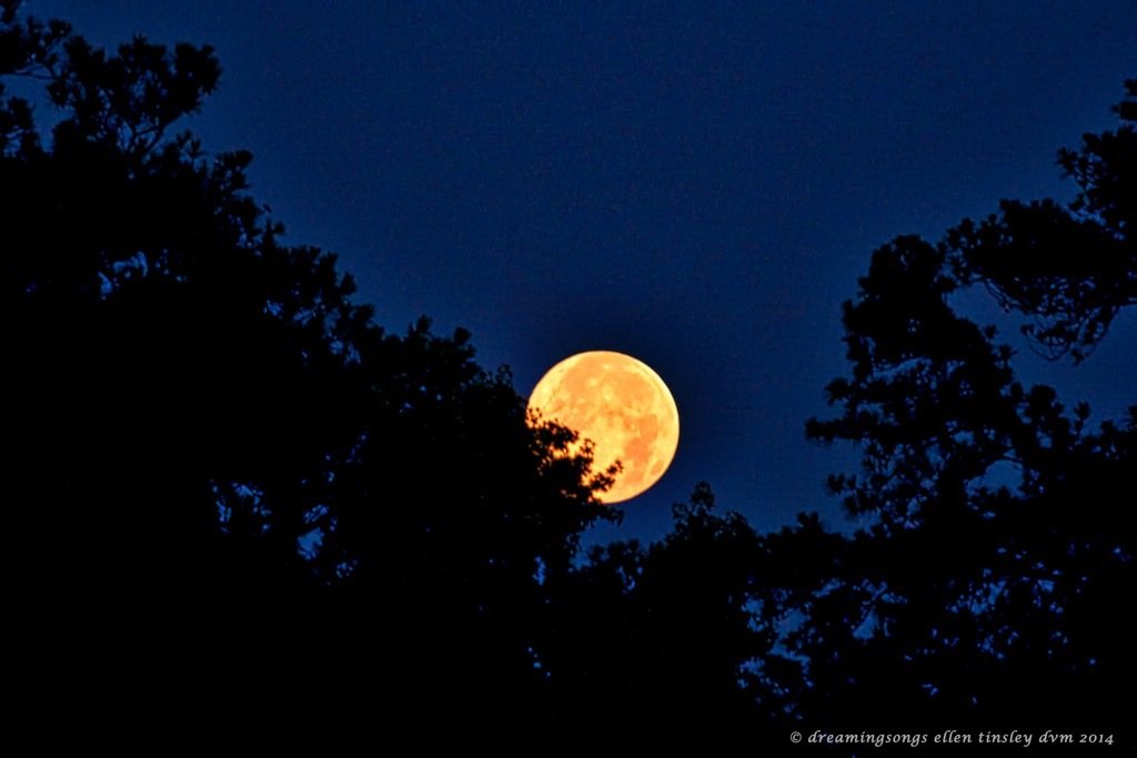 _RK_7247 full moon setting 7-12-20142014