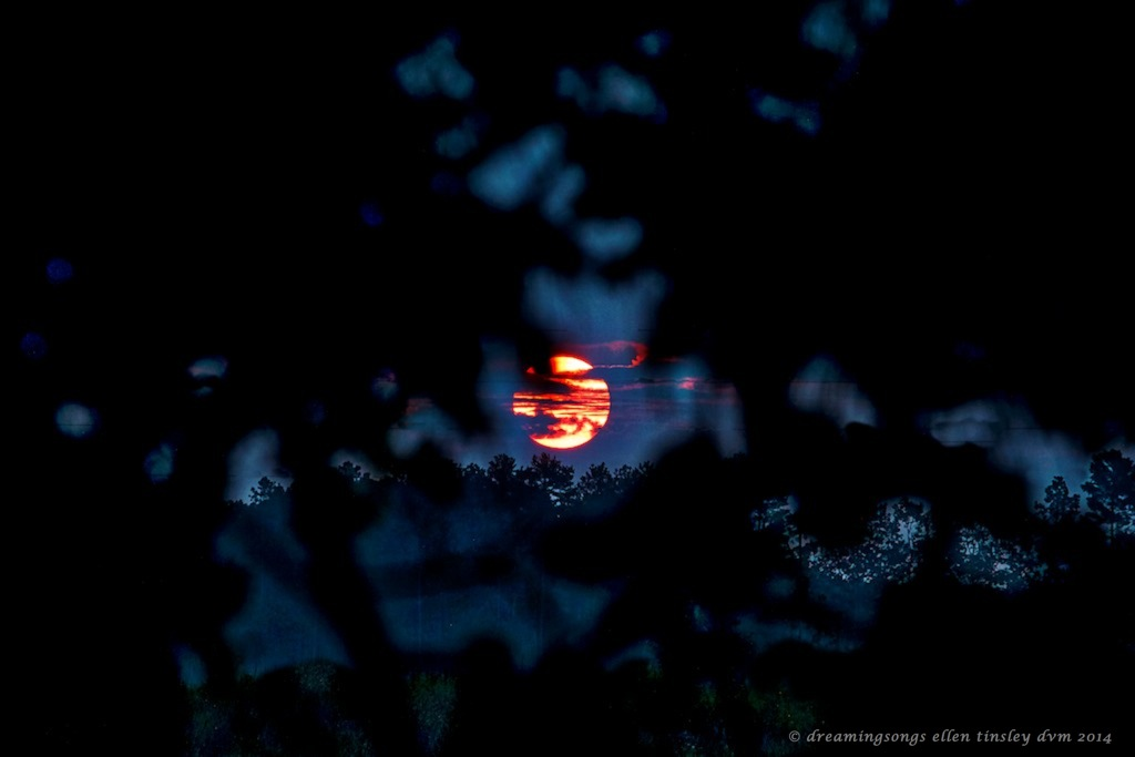 IMG_0176 Creators furnace dawn 2014