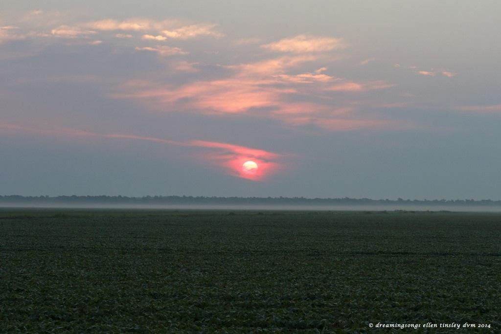 IMG_0296 sunrise poem medium 2014