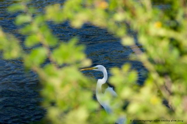 _RK_6589 egret natural vignette 2014 (1)