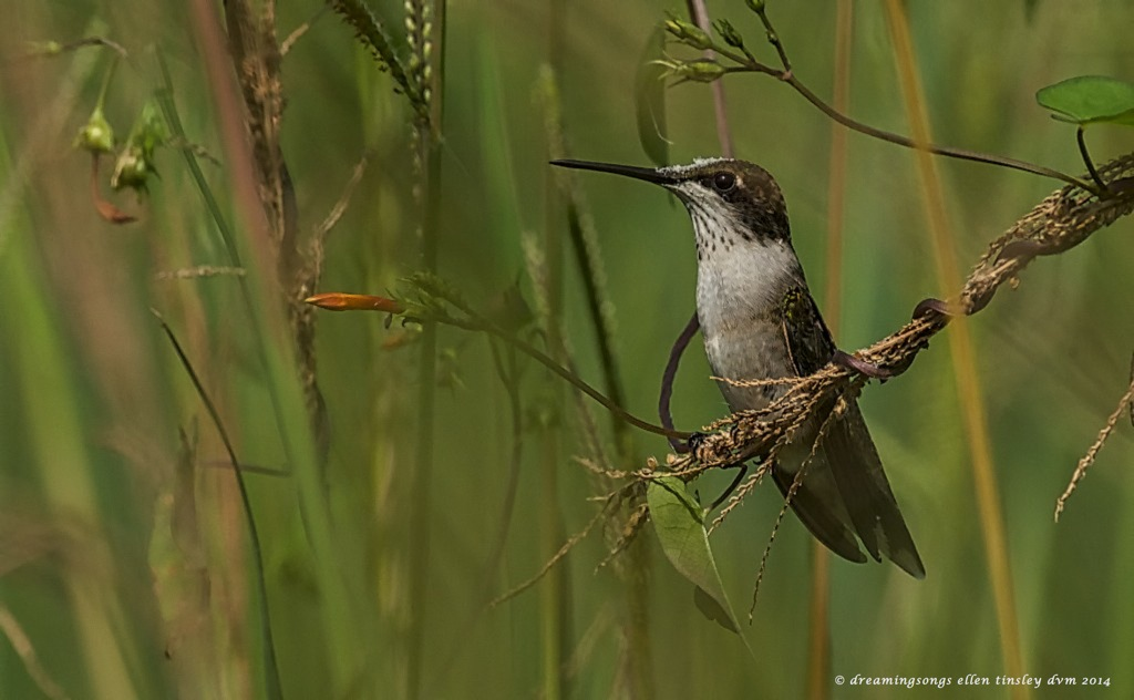 _RK_1062 young male hummer proud 2014