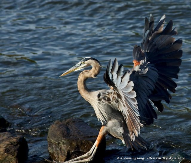 _RK_7931 gbh adult sticks landing small 2014
