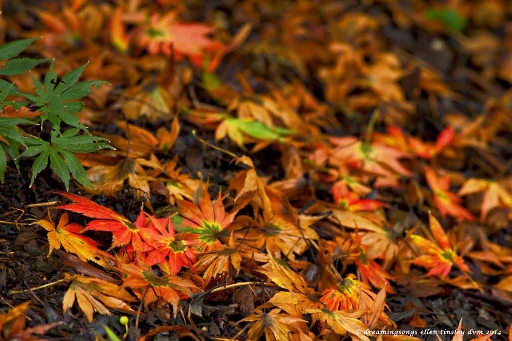 _RK_8995 autumn begins medium2014
