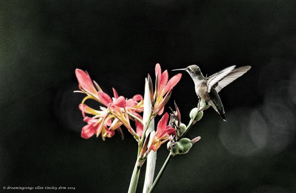 _RK_9344 hummer in flight gritty effect 22014