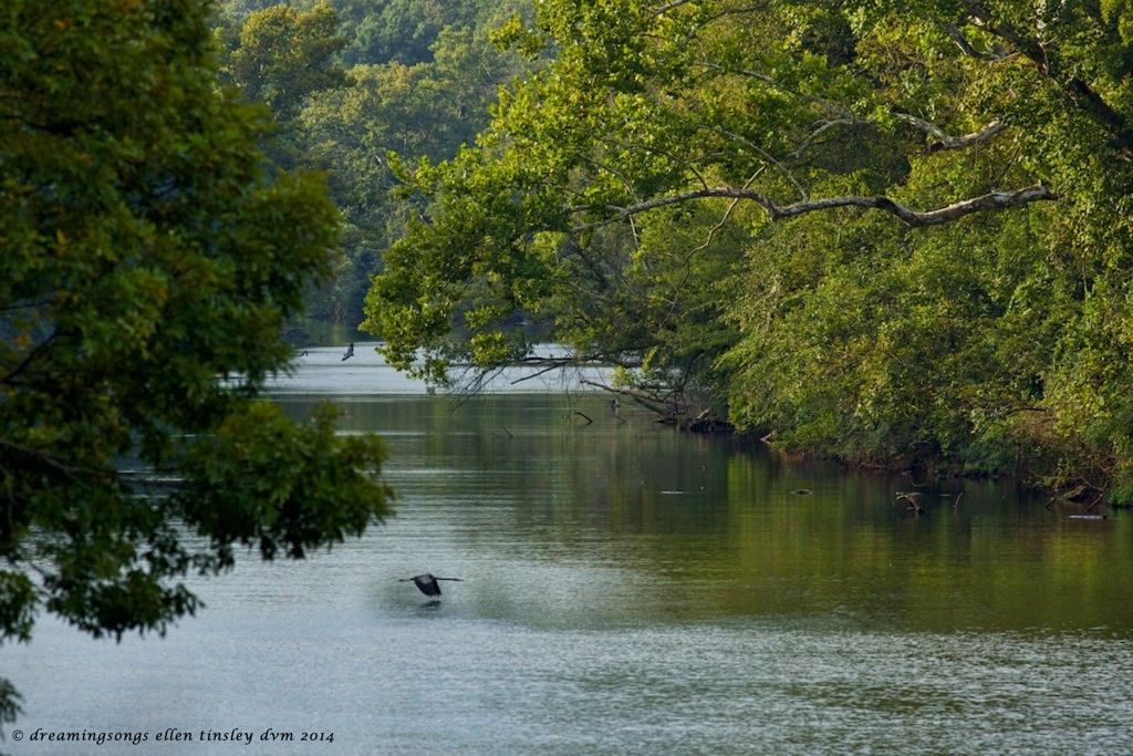 _RK_9898 herons and river 2014 (1)