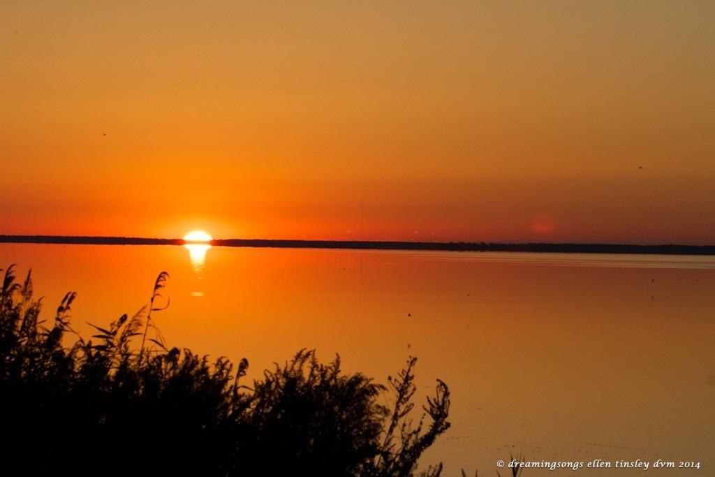 IMG_1388 sunrise sun ghost med 2014