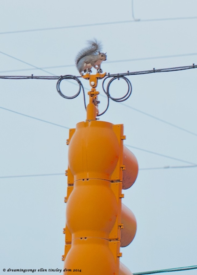 IMG_1601 - Version 2 squirrel and traffic light 2014