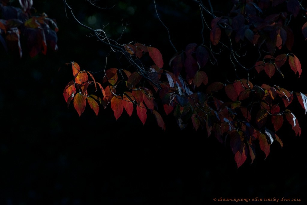 IMG_2410 heart of autumn 2014 (1)