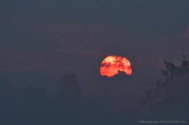 _RK_2328 mink and sun med 2014