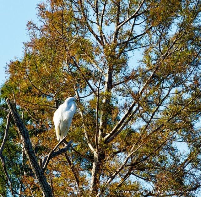 _RK_3239 autumn egret sm 2014