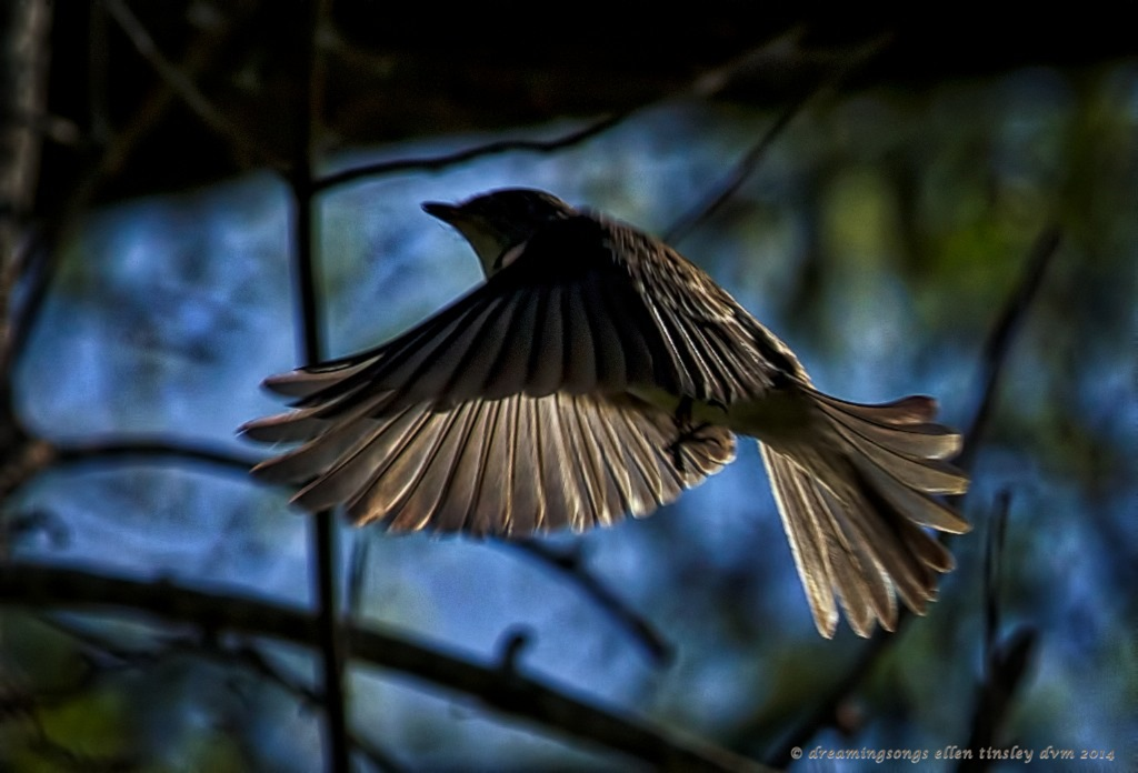 _RK_3349 shadows bird 2014