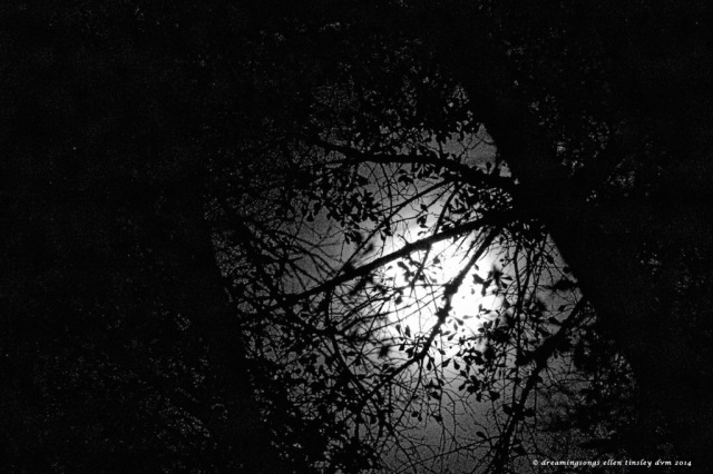 AV2O0021 autumn mystery moon 2014