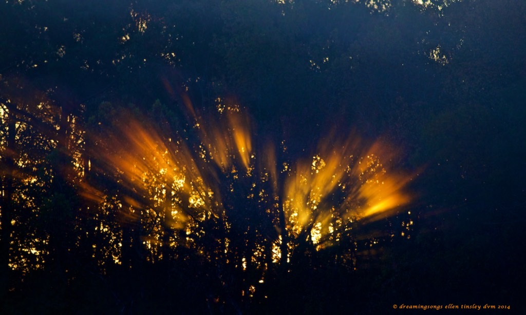 WALK0054 dawn flames 2014