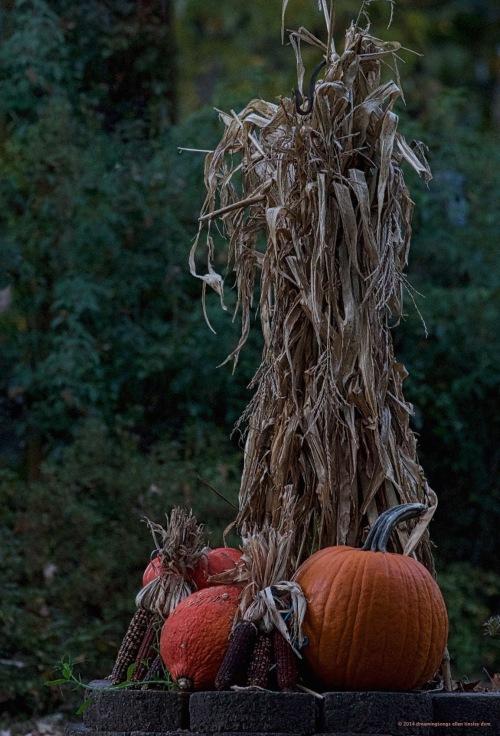 WALK0862 front yard pumpkins 2014