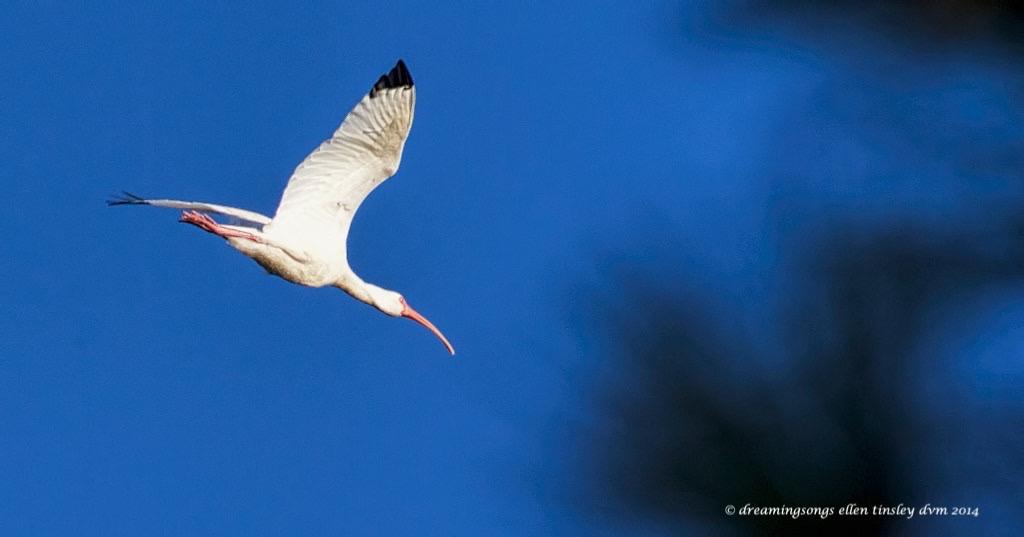 WALK2460 ibis 2014