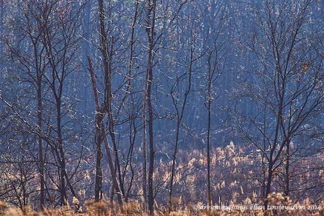 WALK3337 harrier hill morning sm 2014