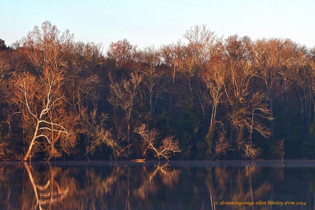 IMG_3484 Cape Fear autumn dawn 2014