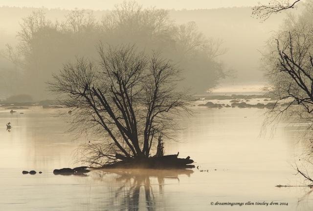 WALK3777 dormant river tree  2014