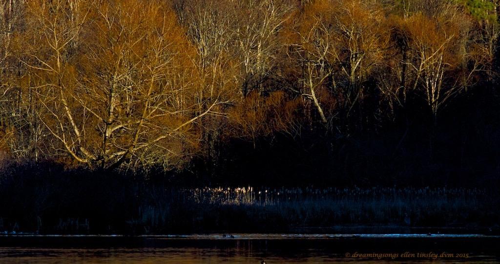 Big Lake, Umstead State Park