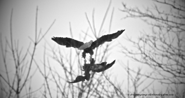 WALK9708 arial talons two 2015