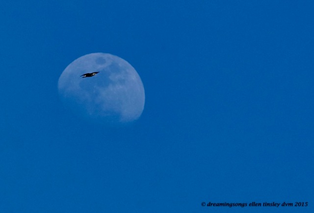 WALK4103 Mar 30 2015  16-53-39 Haw River Eagle rising moon 2