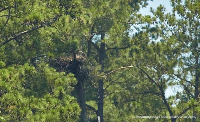 WALK5383 Jun 10 2015 @ 13-15-26 New Hope Jun 10 2015 @ 13-15-26 Empty nest