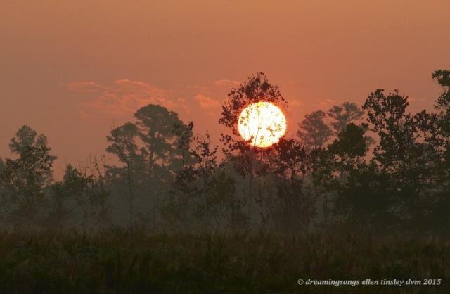 dawn solar circle