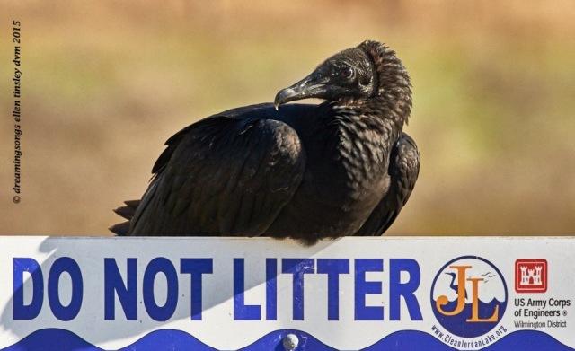 vulture litter sign