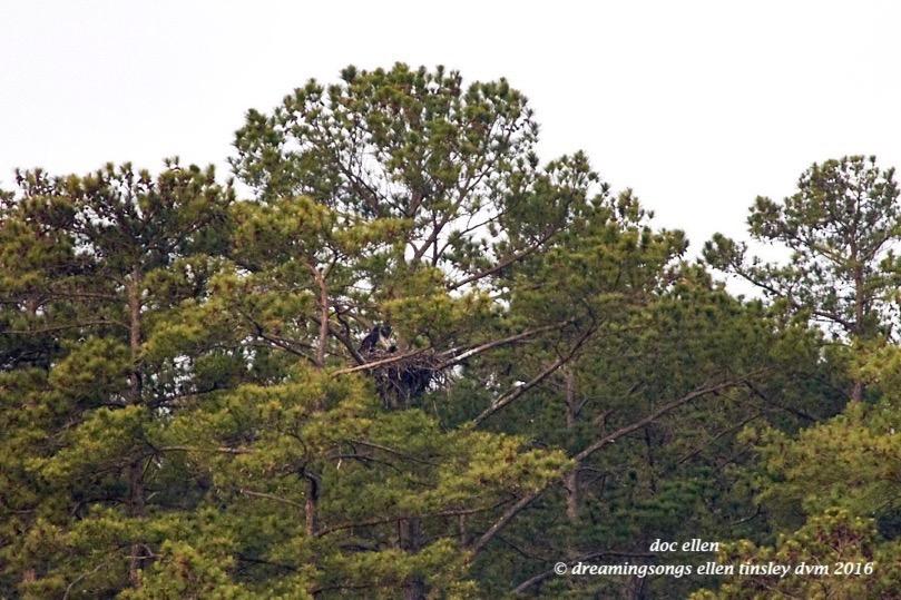 IMG_6397 05-09-16 @ 06-05-40 Pea Ridge Big & Little Chick