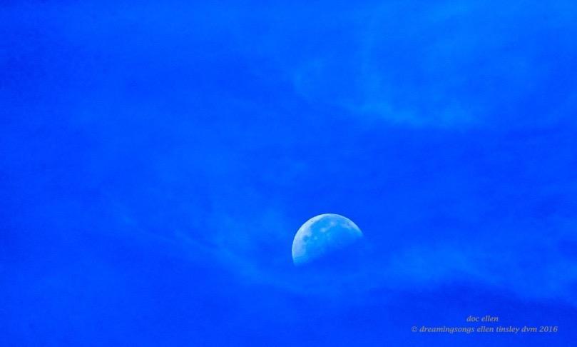 moon Creators hand W4356