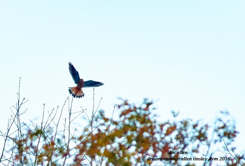 walk6170-11-25-16-08-20-10-jordan-abstract-kestrel