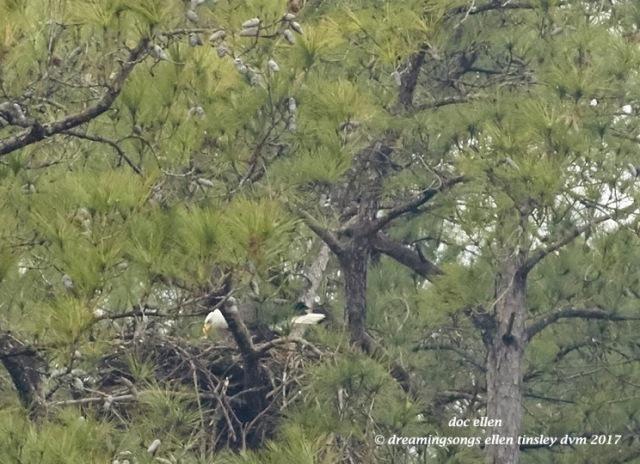 walk3627-01-20-17-14-11-35-new-hope-first-nest