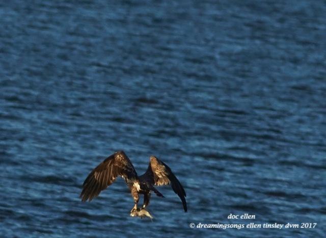 walk3976-01-23-17-09-16-25-ebenezer-feast-bald-eagles