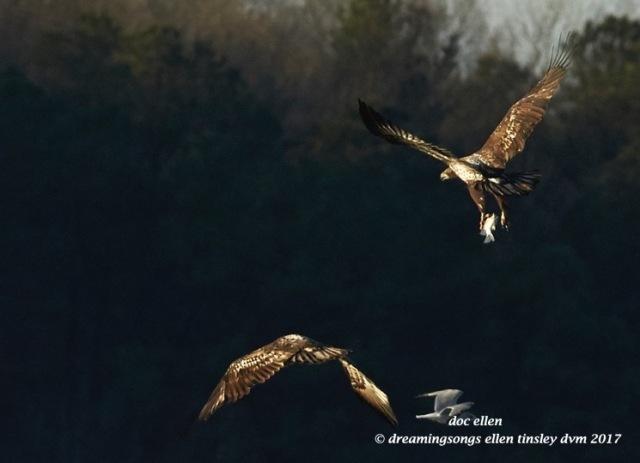 walk4040-01-23-17-09-17-04-ebenezer-feast-bald-eagles