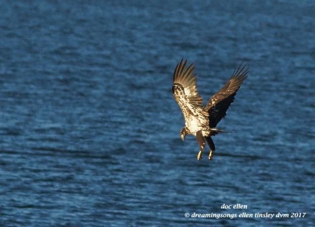 walk4076-01-23-17-09-18-05-ebenezer-feast-bald-eagles