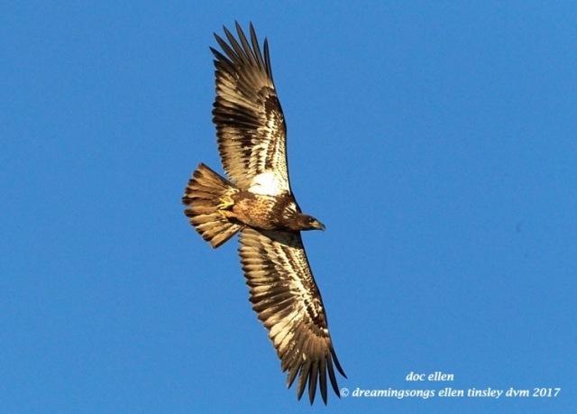 walk4106-01-23-17-09-19-43-ebenezer-feast-bald-eagles