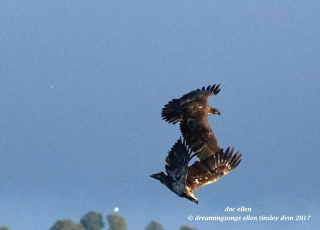 walk4270-01-23-17-09-26-36-ebenezer-feast-bald-eagles