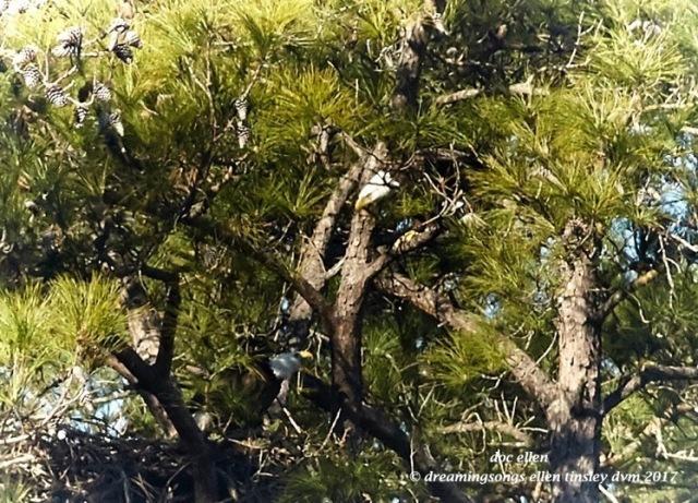 walk4877-01-25-17-10-45-20-new-hope-first-nest-hatch