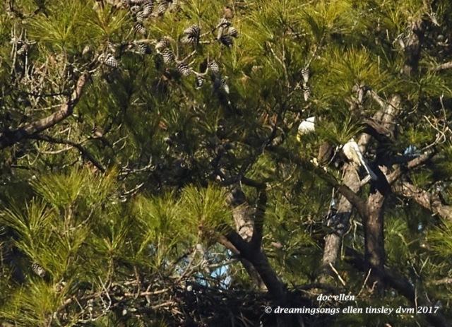walk4908-01-25-17-10-46-00-new-hope-first-nest-hatch