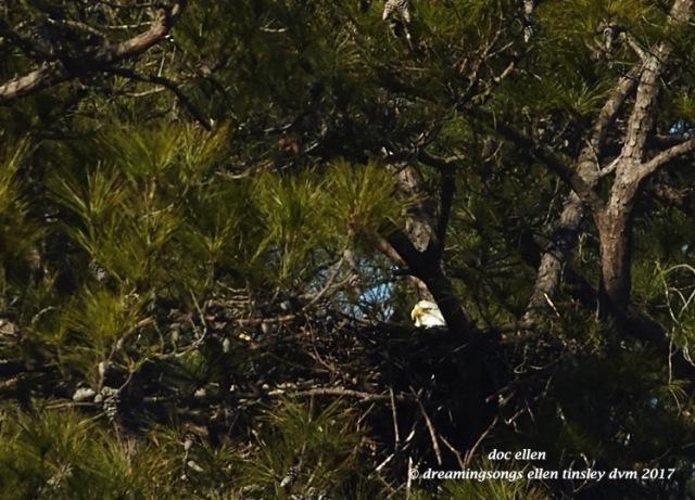 walk4950-01-25-17-11-13-29-new-hope-first-nest-hatch