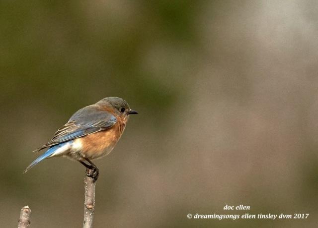 walk0180-02-21-17-10-38-51-jld-jln-bluebird