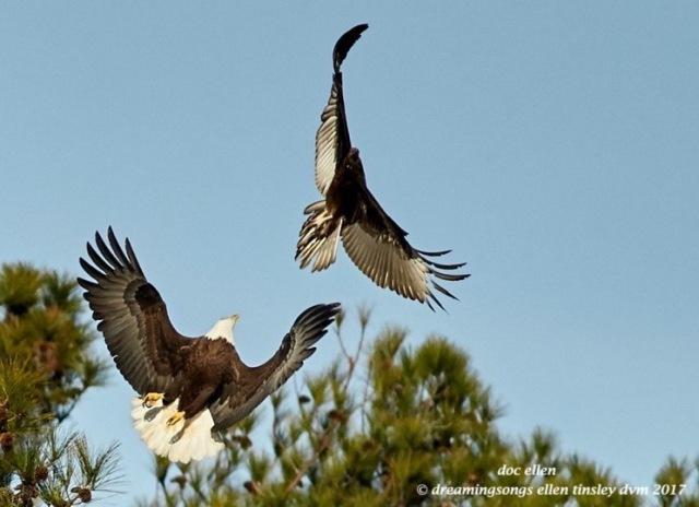 walk6059-01-31-17-10-25-27-new-hope-kate-vulture
