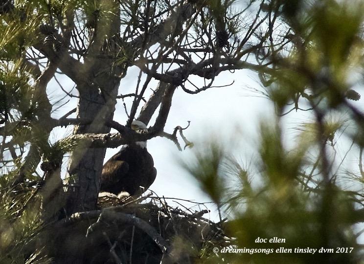 walk6524-02-01-17-15-58-36-jordan-llh-nest