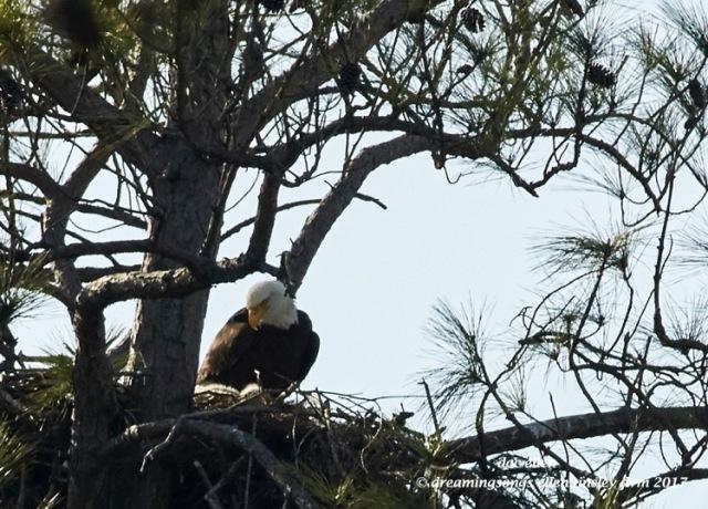 walk6547-02-01-17-15-59-15-jordan-llh-nest