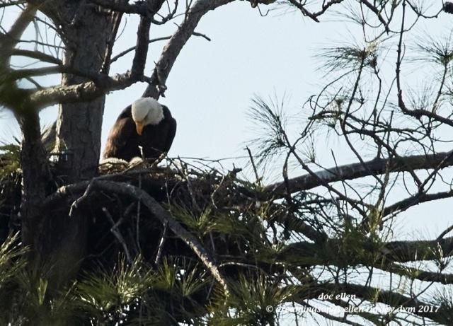 walk6566-02-01-17-16-02-11-jordan-llh-nest